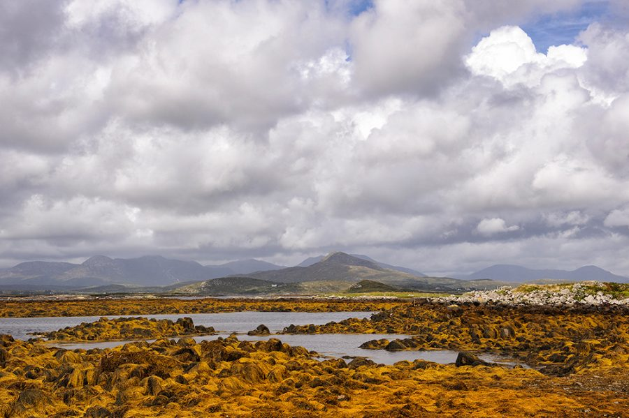 Cashel Hill and Seaweed
